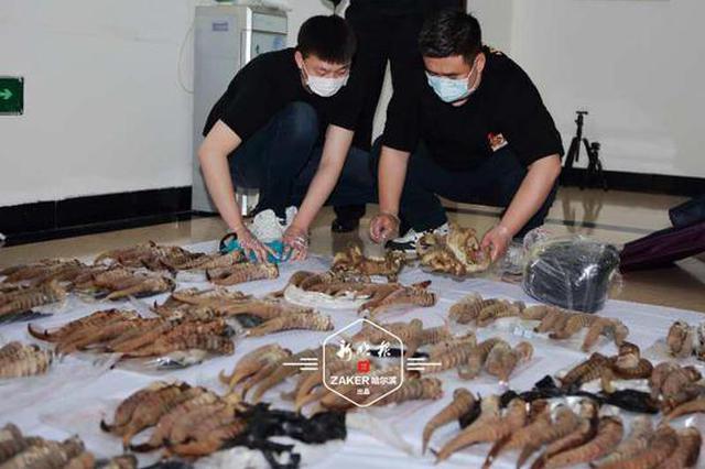 案值1800万元 黑龙江省侦破特大走私珍贵动物制品案