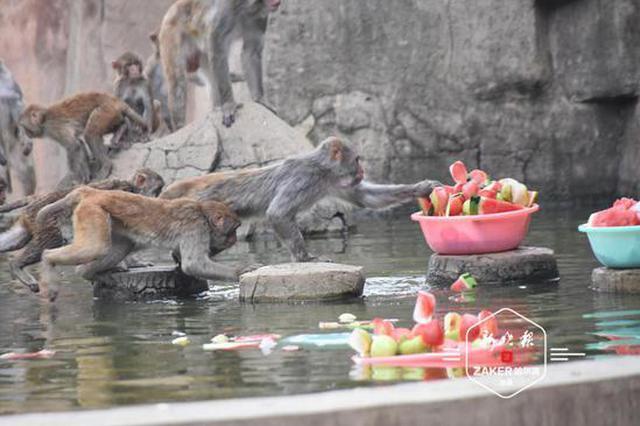 再热也不怕 北方森林动物园的小动物们美美过夏天