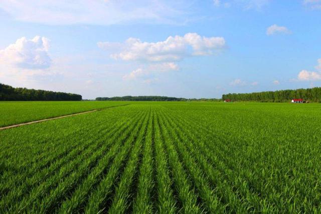 截至目前哈尔滨市各种农作物长势整体好于去年