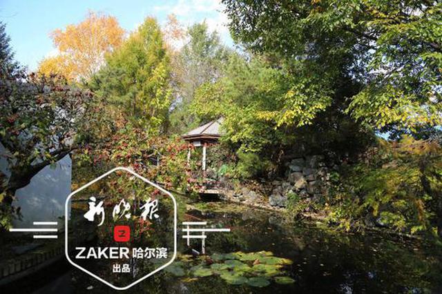 竹林、枫叶、水彩 国庆假期 哈尔滨这里文艺范儿满满