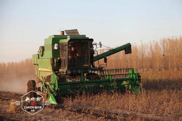 哈尔滨各农场掀起抢收热潮 确保雪前粮食颗粒归仓