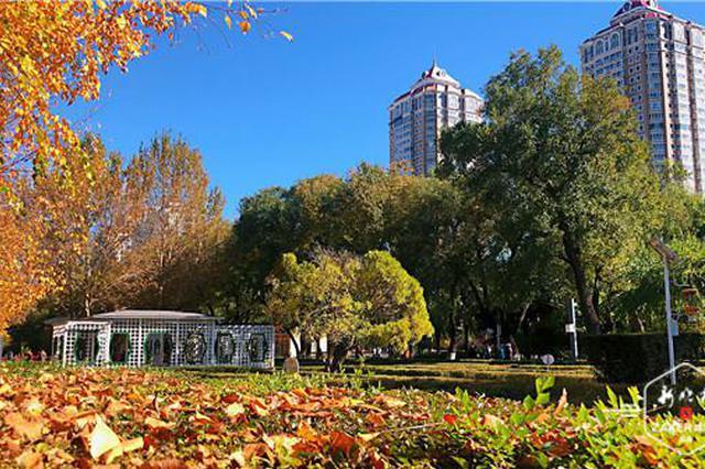 """打卡冰城美秋!32个公园设置42个最佳""""落叶景观区"""""""