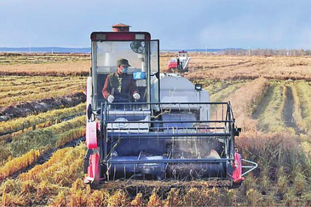 黑河5万台农机开足马力抢秋收 底完成大豆玉米水稻收割