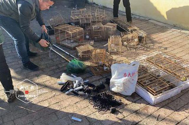 非法捕鸟高峰已到 志愿者1天解救300余只野生鸟