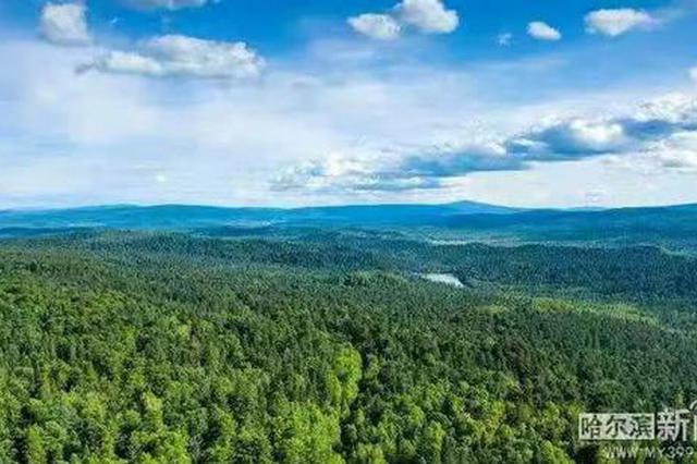 龙江整体植被生态质量20年最优 林草生态建设成效显著