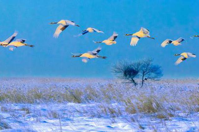 世界首创极地动物表演秀 黑龙江打造极致冰雪盛筵