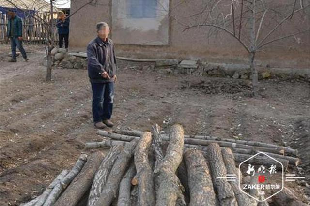 七旬老汉上山伐木 没想到采伐的竟是国家重点保护林木