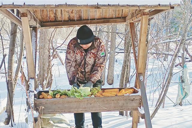 """绥阳林区补饲小队 冬季为野生动物""""开小灶"""""""