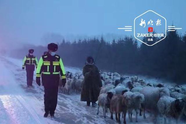 """羊群犯起""""牛脾气""""跑上公路 民警雪中化身""""羊倌"""