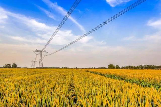 农业农村部 全力完成1亿亩 高标准农田年度建设任务