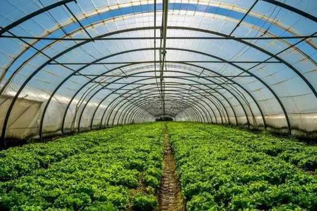 """哈尔滨市春季""""菜篮子""""播种7.5万亩 4月批量上市"""