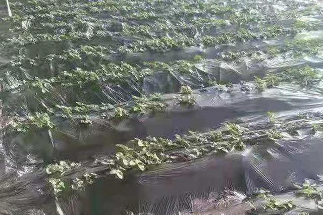 """本地叶菜快来啦!哈市春季""""菜篮子""""播种7.5万亩,4月批量上"""