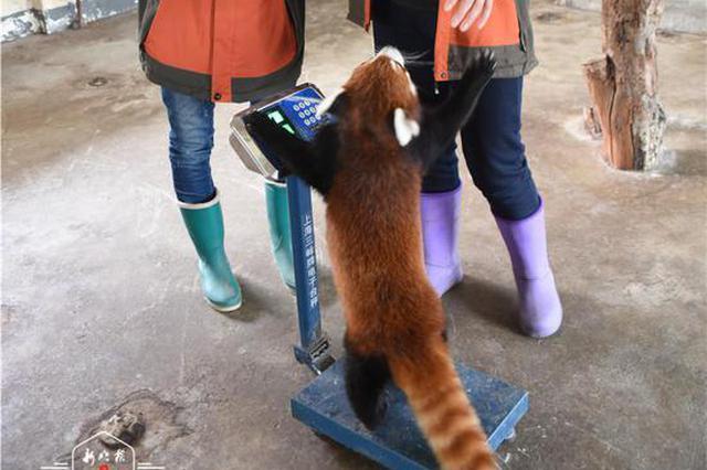 """16日恢复对外开放!北方森林动物园的""""小可爱""""们已全员接受体"""