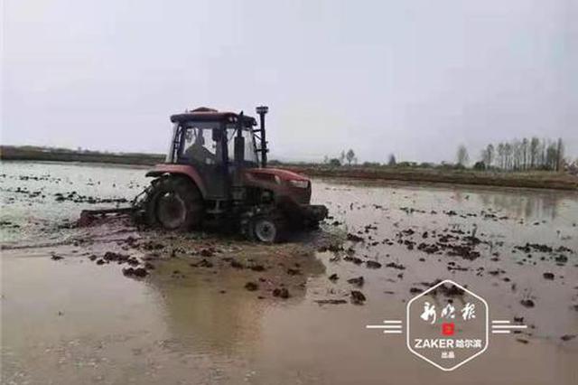 不负好时光!哈尔滨水田插秧启动,玉米播种超八成