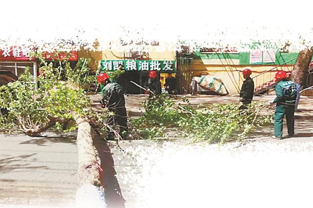 哈尔滨市文平街 20厘米粗大树被大风吹断