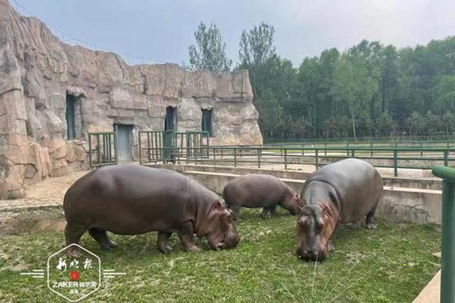 动物园里的端午节:粽子、五彩线、葫芦、荷包一样都不少