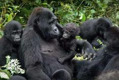 乌干达带你开启夏日非洲大冒险