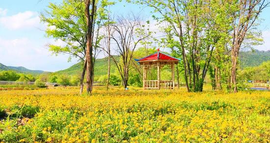 伊春九峰山养心谷景区地处黑龙江省小兴安岭境内,位于鹤伊公路68公