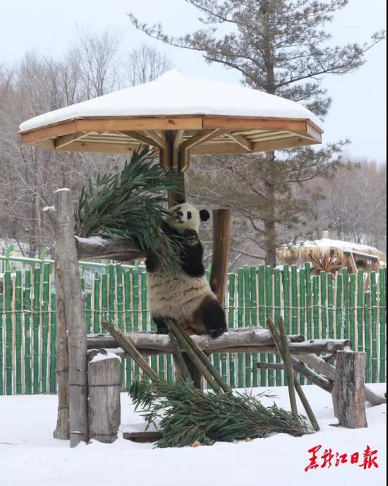 亚布力熊猫馆。