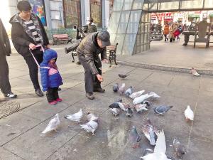 市民投喂野鸽。