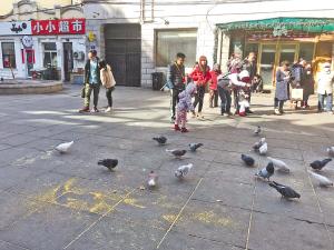 鸽子洗澡吸引众人围观拍照。