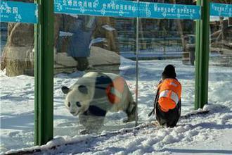 """""""淘学企鹅""""滑雪节约会大熊猫"""