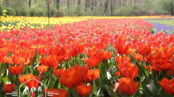 拿着这份赏花攻略植物园约起