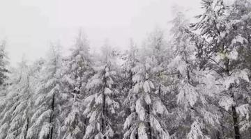 一秒入冬 大兴安岭九月飘雪