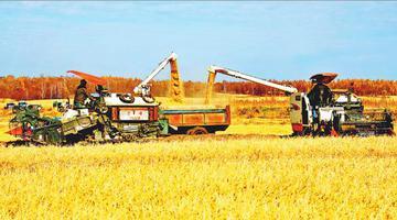 垦区建设农场水稻种植区