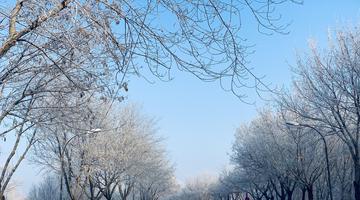来太阳岛雪博会看树挂吧