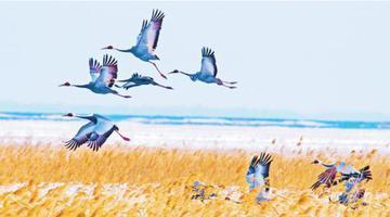 春风送暖珍鸟飞回