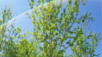 省森林植物园秋景园二期改造启动