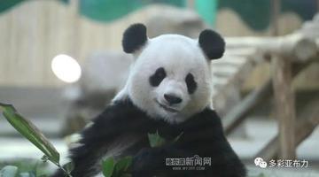 亚布力熊猫馆开园
