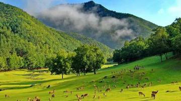 黑龙江推出28个森林康养目的地