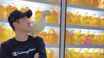 佳木斯小伙:爱鸭相伴嘎嘎欢乐