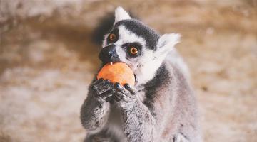 动物园小伙伴吃的元宵都是啥馅的?