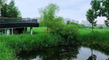 夏日湿地公园的如画风景