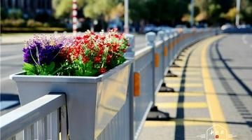 景观交通护栏亮相哈市街头