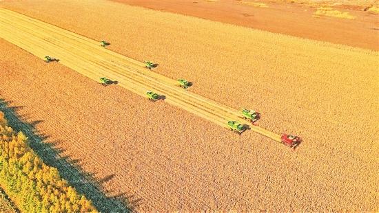黑龙江省粮食生产喜获十八连丰 总产有望再创历史新高