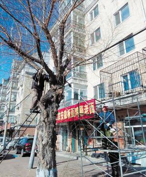 工作人员正在修剪树木