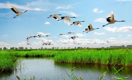 齐齐哈尔扎龙湿地