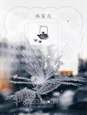 极寒中盛开的花 是大自然的馈赠