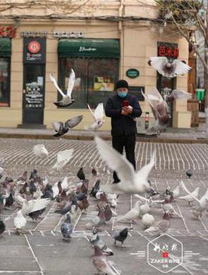 冰城老街喂鸽人每天背40斤鸽粮来广场