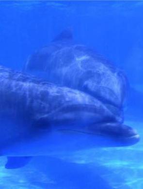 3只海豚抗住50℃温差冰城安家