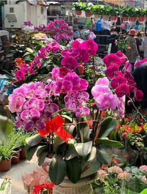 满眼春色惹人醉,花卉市场春盎然