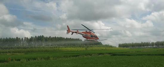 7月26日直升机在绥棱县长山镇十部村进行飞防作业 李磊摄