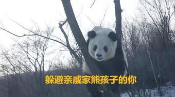 春节在家的你和冰城这俩熊猫简直一样