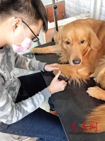 工作人员在为寄养的宠物剃毛
