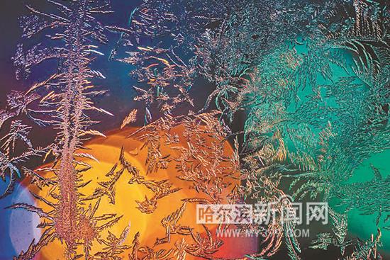 窗花。哈尔滨新闻网手机记者 残剑/摄