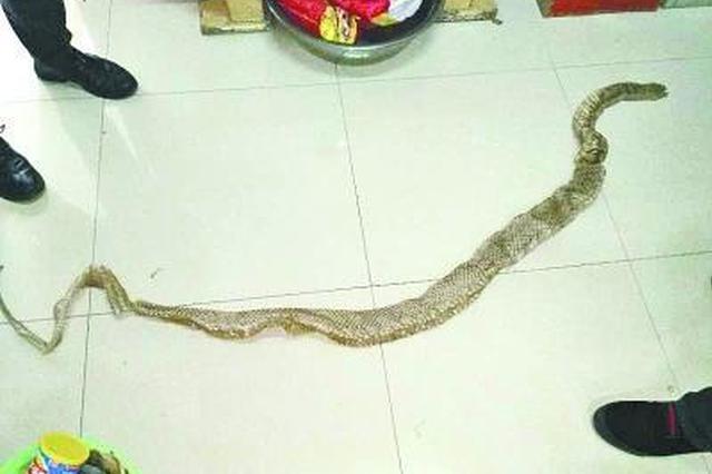 2米多长蟒蛇船内脱皮 船员:难怪老鼠少了(图)